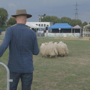 Dominic Byrne sheep